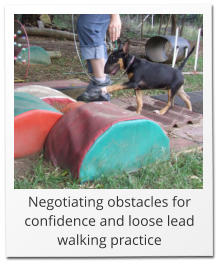 Negotiating obstacles for confidence and loose lead walking practice