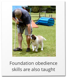 Foundation obedience skills are also taught