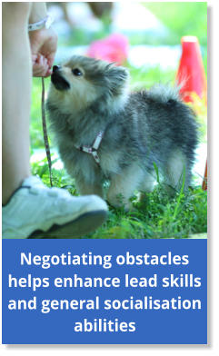 Negotiating obstacles helps enhance lead skills and general socialisation abilities